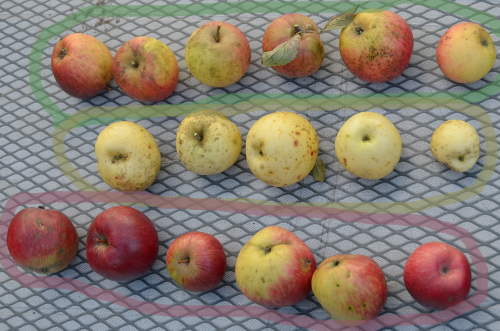 Apples can be subclassified into sorts
